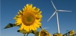 Wind turbine with sunflower