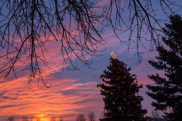 Basin-Christmas-Tree-sunrise-4