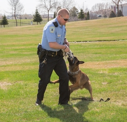 Officer Tim Sass of Bismarck Police performs a demonstration with his K-9 partner, Oscar, on Wednesday, as part of Safety & Wellness Week at Basin Electric.