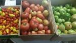 Basin's Backyard Garden - the final donation of tomatoes.