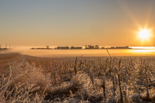 A foggy, late October sunrise in central South Dakota. Photo credit: Randy Halverson
