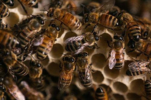 bees-close-up