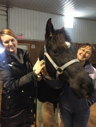 Basin Electric employees Tammy Langerud (left) and Erin Huntimer (right) with Belle, the leader of the horse herd and animal instructor.