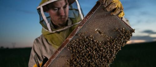 Backer Bees
