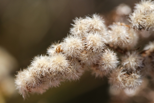 Fuzzy plant up close