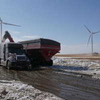 Semi fills up with corn in front of wind turbines.